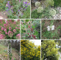 Mosaïque de fleurs sur le baou