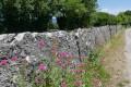 Mur de pierres dressées à Parmilieu