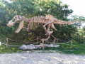 Muséum paléontologique de balazuc