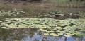Le plateau des 1000 étangs à Beulotte-Saint-Laurent