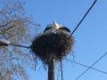 nids de cigogne