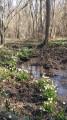 Les nivéoles de Saint Bernard