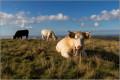 Le Puy Violent et la Croix des Vachers