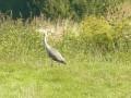 Oiseau inconnu