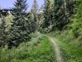 On rentre dans la forêt