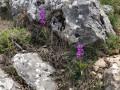 Orchidée sauvage ?