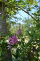Le chemin des orchidées à Simorre