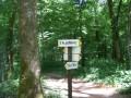 Forêt de la Menère - Besançon - Tilleroyes