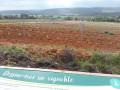 De vigne en vigne à Brue-Auriac