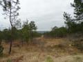 Par la Forêt Communale d'Argol