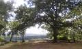 De La Ferté-Alais à Chamarande