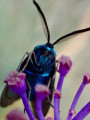 Papillon de nuit ...