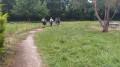 Parc communal de Bonrepos