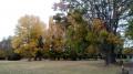 Parc des Tilleuls