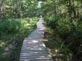 Tour de l'Etang de Saint Bonnet-Tronçais au coeur de la Forêt de Tronçais