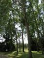 Parking ombragé de l'étang communal de Rouvres-les-Bois