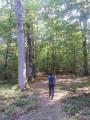 Parmi une haute futaie de chênes