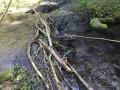 Passage à gué du ruisseau de Gros-Fays