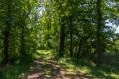Passage dans un bosquet