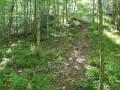 Forêt de Giverzat