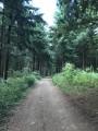 Passage en forêt