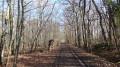Passage en sous bois