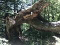 Passage sous arbre