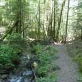 Passerelle dans la forêt