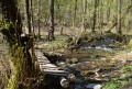 Passerelle et ruisseau