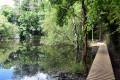 Passerelle le long de l'étang