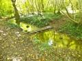 Passerelle pour franchir le ruisseau située au bout de l'étang de bournay