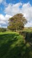 Path in farmland