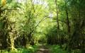 Forêt de Vaucluse