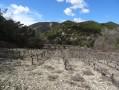 Paysage typiquement provençal avec ses vignes