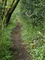 Petit chemin bordé d'arbres