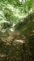 Petit chemin sous les arbres