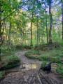 Petit tour dans le Bois du Haut à Oloron-Sainte-Marie