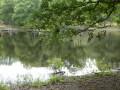 Forêt Rambouillet - Rochers d'Angennes & Ancienne abbaye des Moulineaux