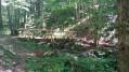 Petit pont de bois à mis chemin