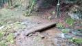 Petit pont de bois sur le Bruckenwald