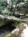 Entre forêt et Rigole en Montagne Noire