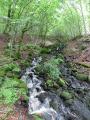 Forêt de Montbert et Lac Chauvet