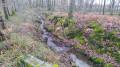 Petit ruisseau de Cazalas