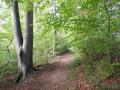 Petite incursion en forêt domaniale de Brotonne