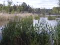 Petite lagune près du stade