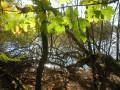 petite mangrove aux abords du lac de Faux-la-montagne