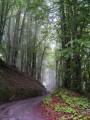 Petite route serpentant pour gagner le hameau du Mont