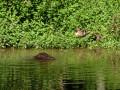 Petits habitants de l' étang de Rosière