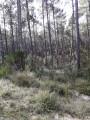 Dans la forêt domaniale de Biscarrosse Plage