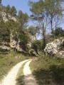 La Forêt des Cèdres depuis Mérindol